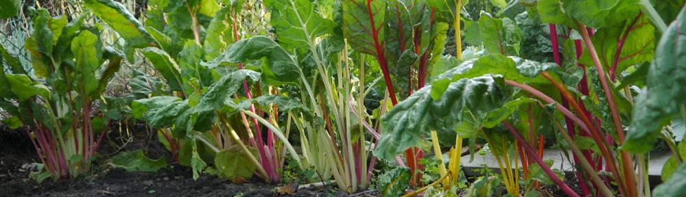 Mark's Garden Blog