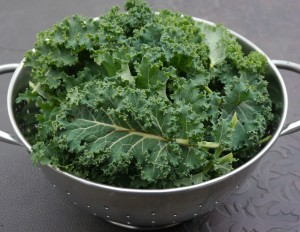 Garden kale picked for Thanksgiving.