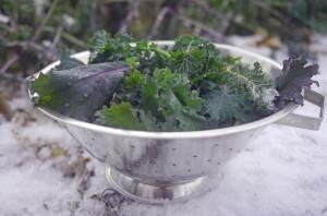 January Kale
